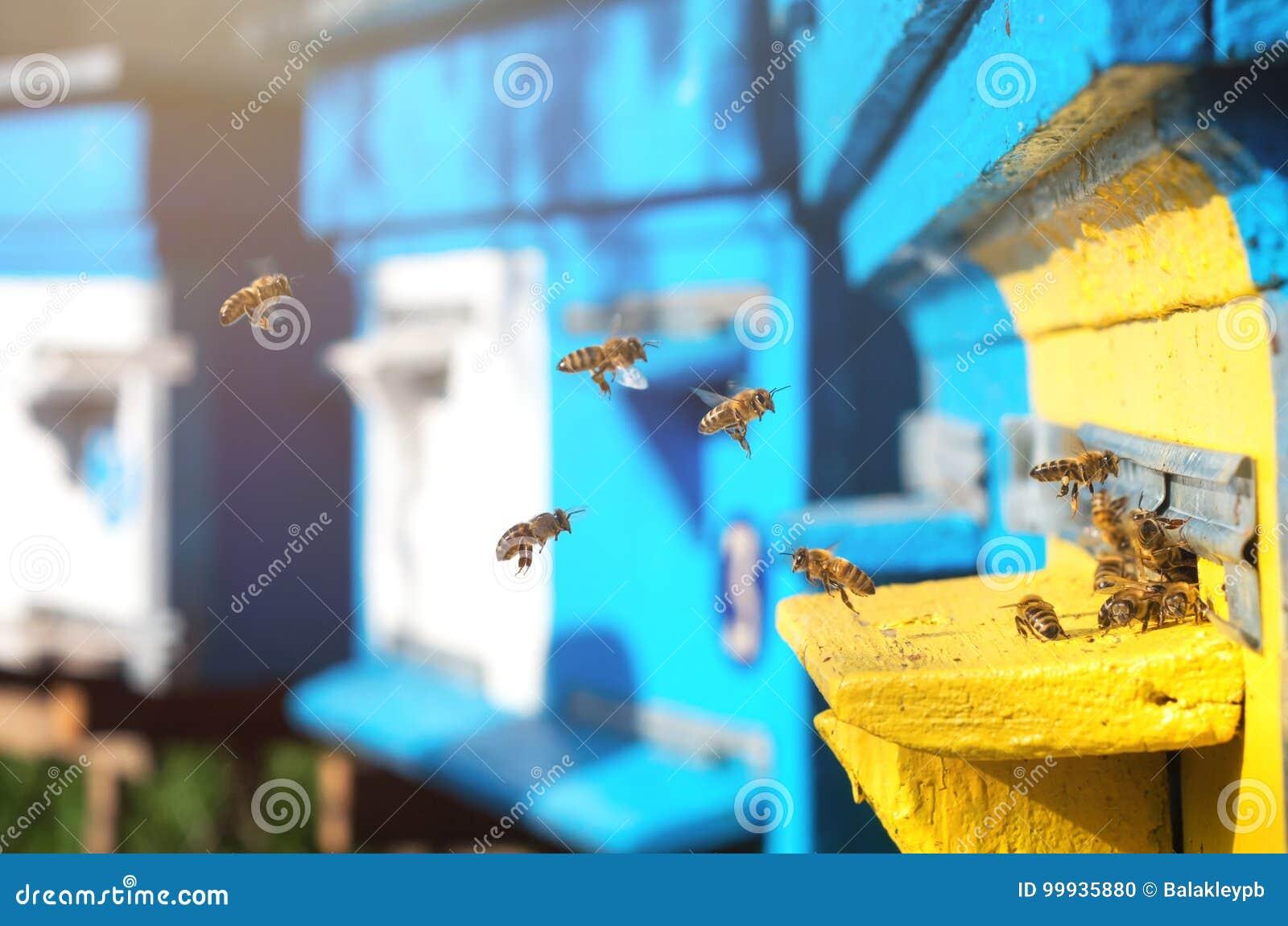 Bijen dichtbij de bijenkorf