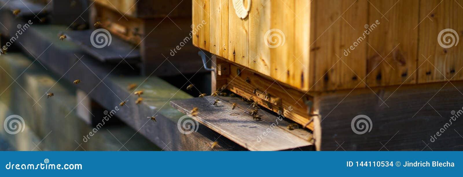 Bijen die houten bijenkorf op een zonnige dag ingaan