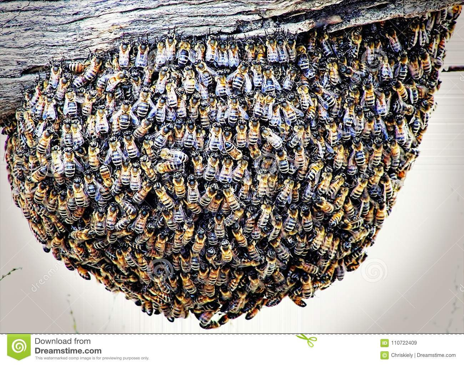 Bijen op Post