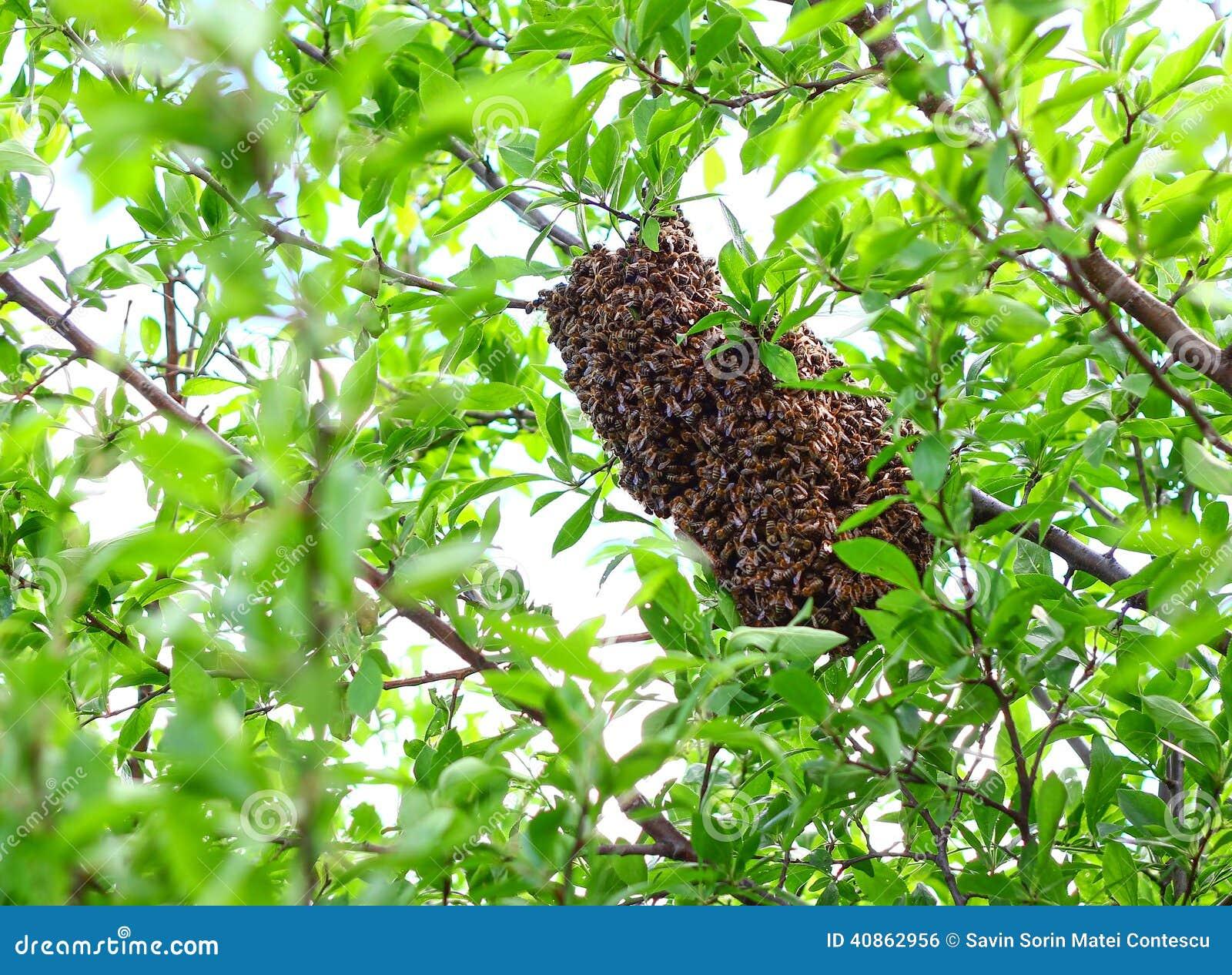 Bijenbijenkorf in een boom