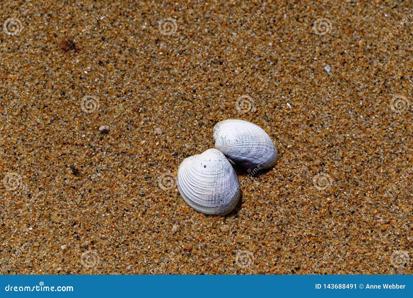 Bijna gescheiden ligt shell file op een zandig strand
