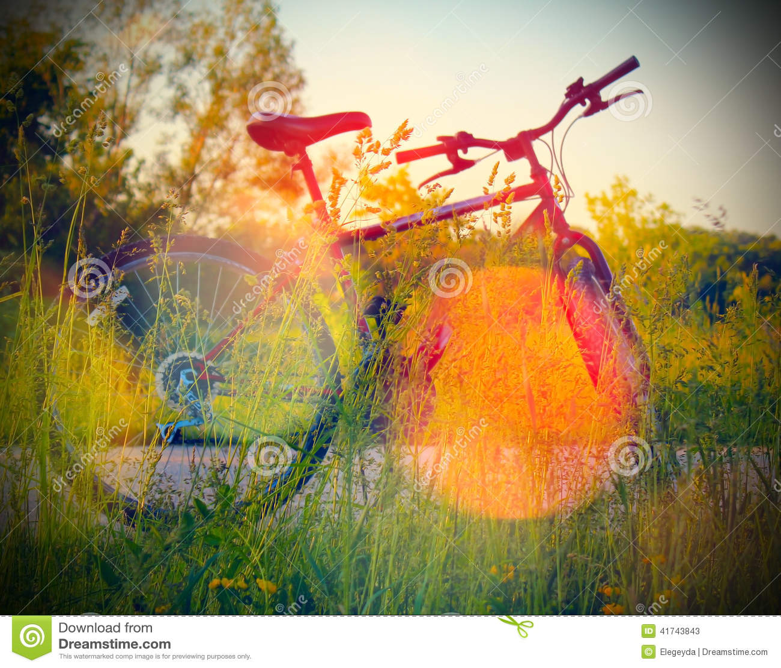 Bike la prospettiva biking della montagna delle mani della foresta del fuoco del campo di profondità del ciclista poco profonda