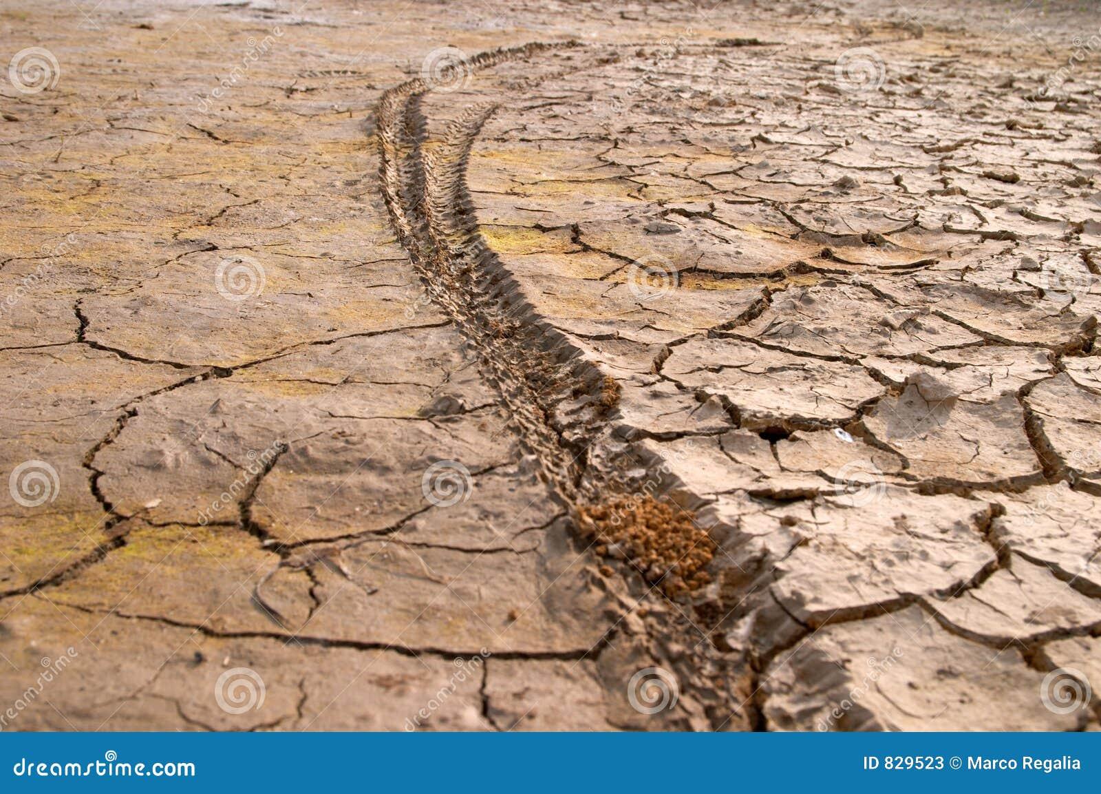 Bike tire print on dry mud cracks