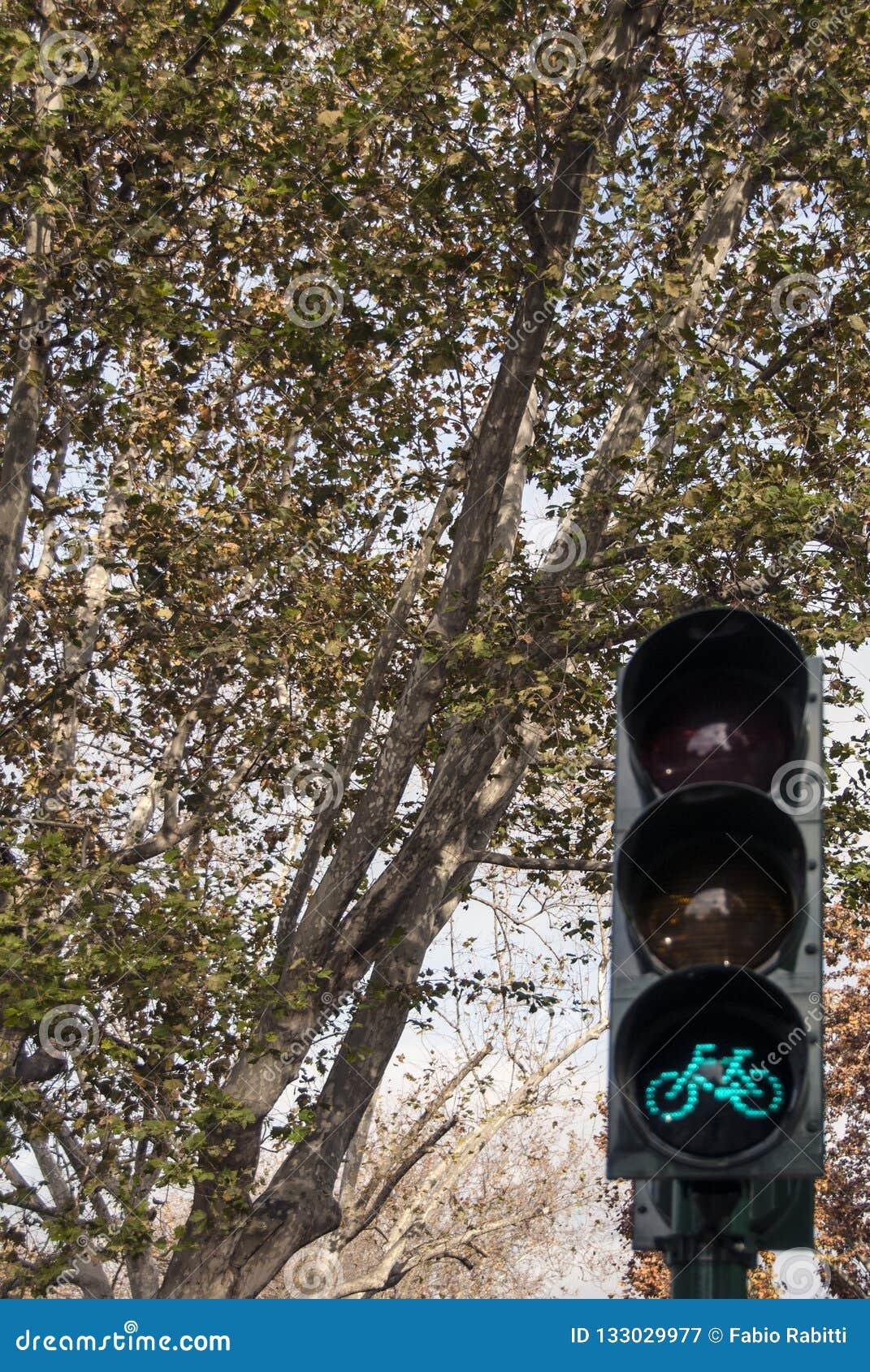 Bike traffic light on tree background.