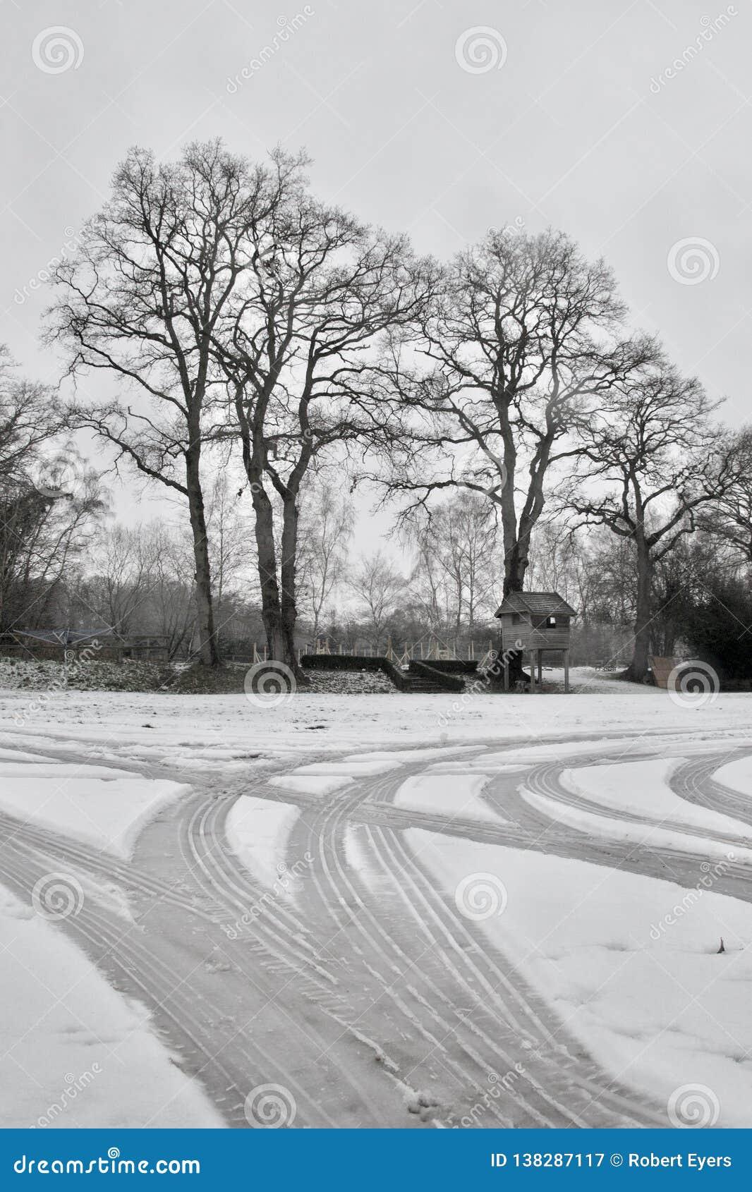 Bildäckspår i snö på körbanan; kala vinterträd och trädgårdträdhus