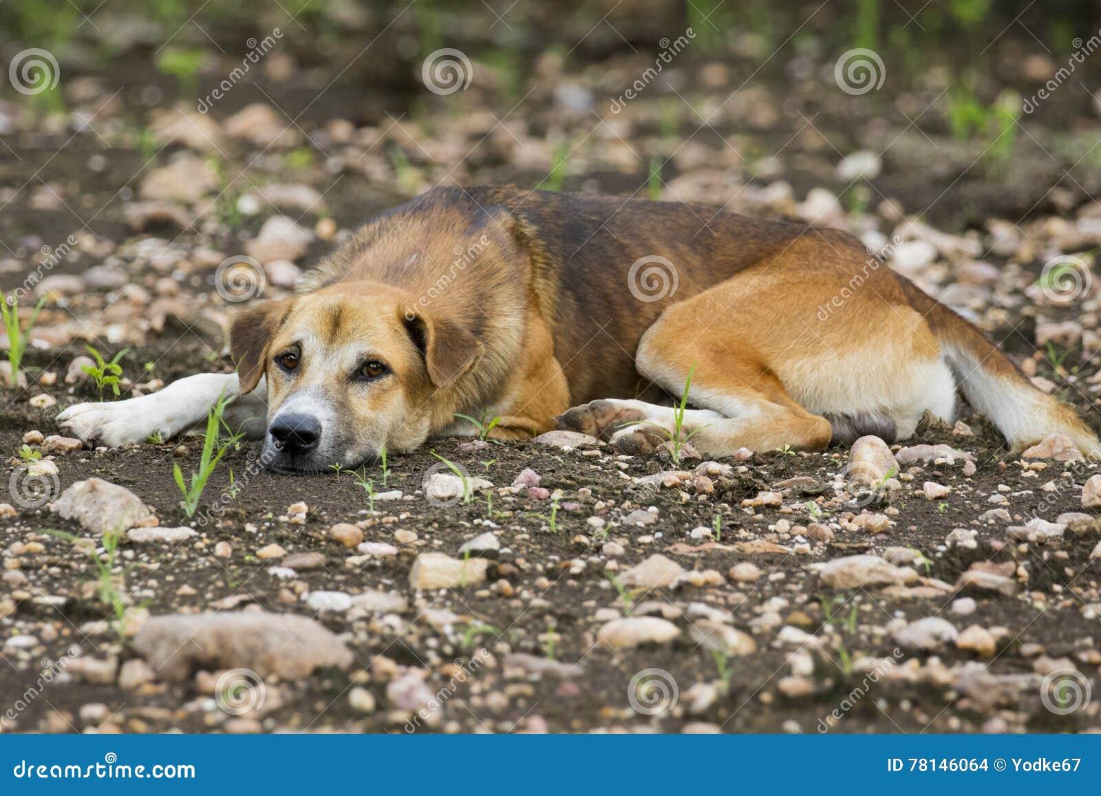 Bild av den bruna hunden