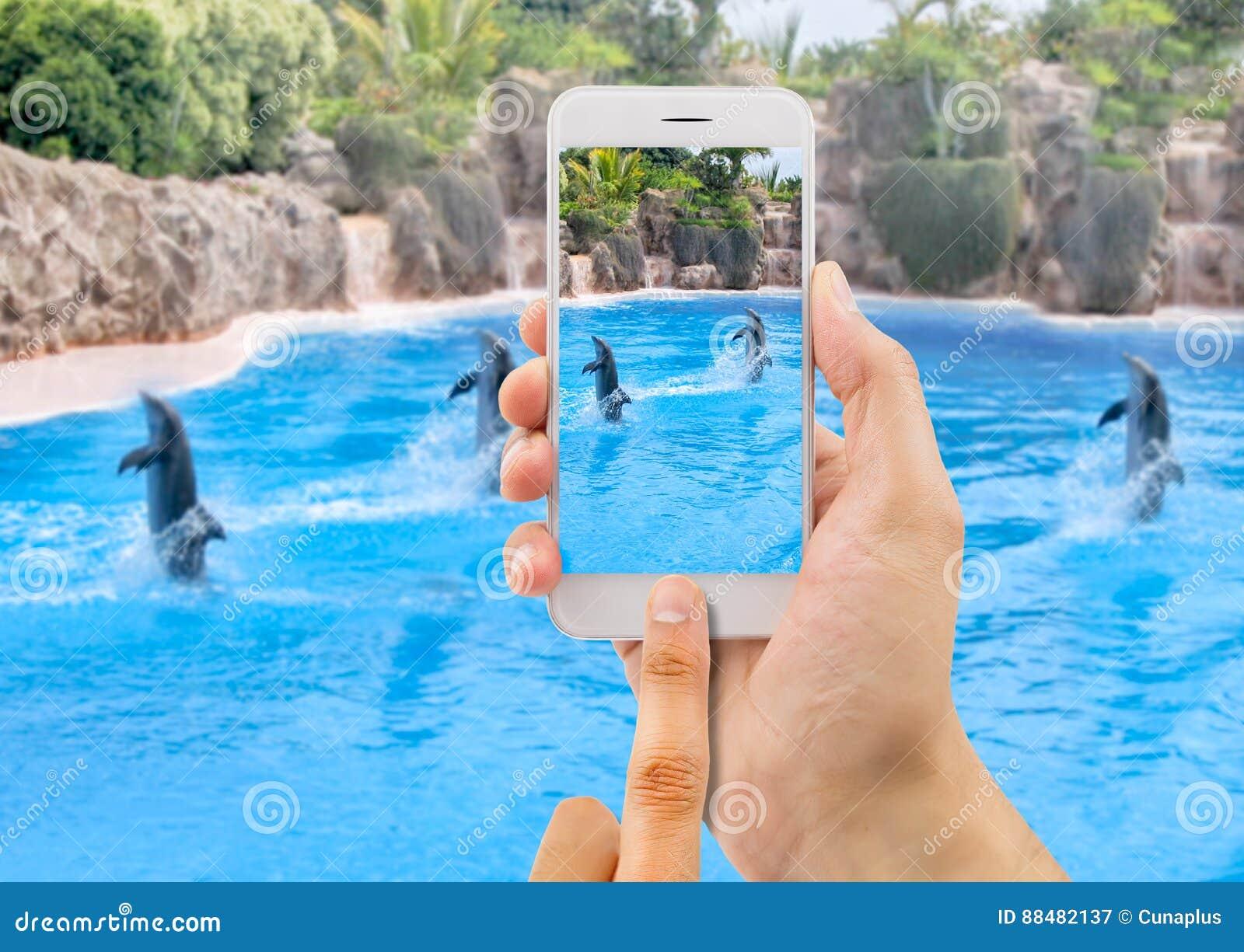 Bild av en grupp av delfin