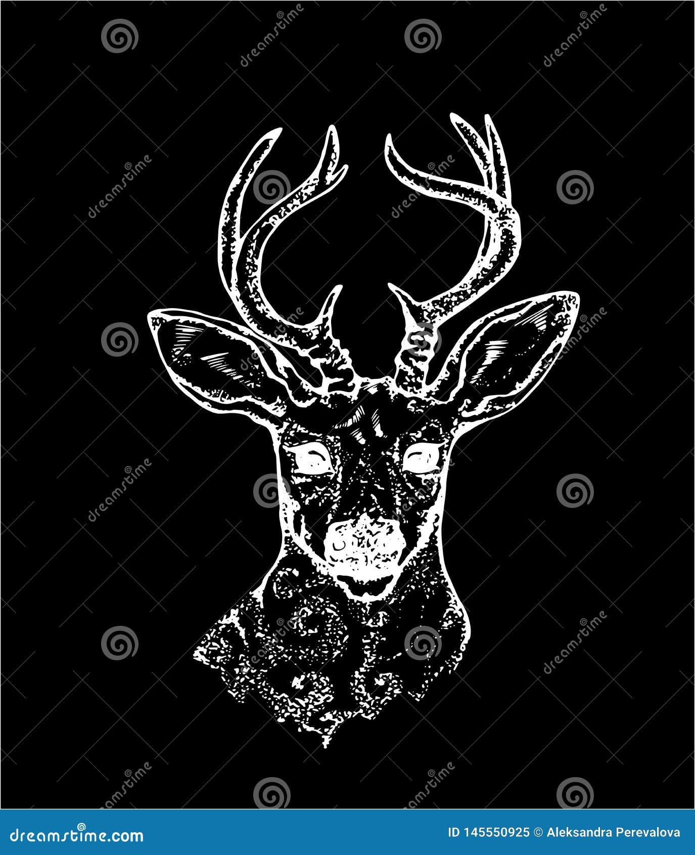 Bild av en hjort med påfågelfjädrar i horn Svartvit vektor av dekorerade hjortar Krita p? en blackboard