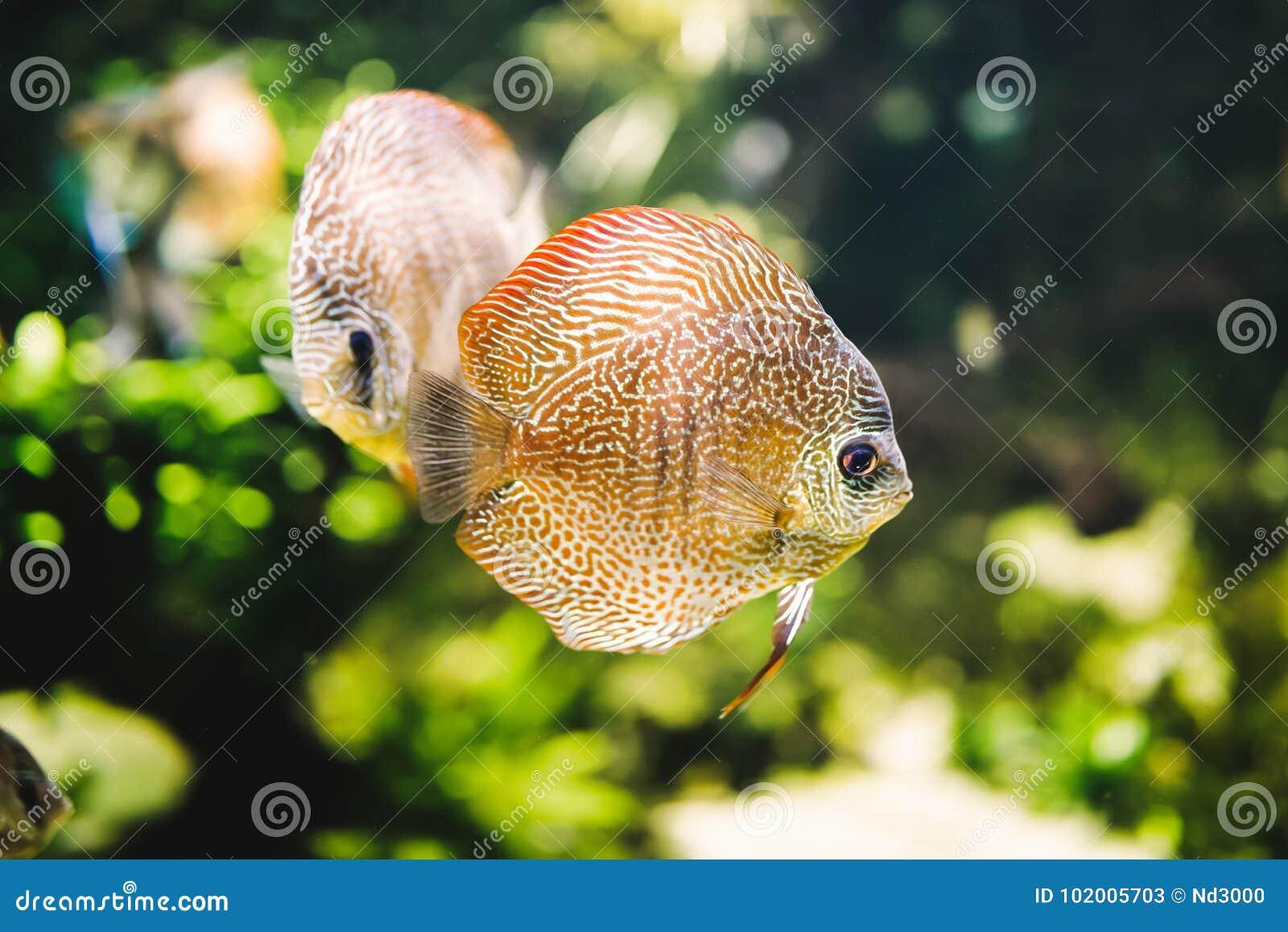 Bild av härligt exotiskt simma för fisk som är undervattens-