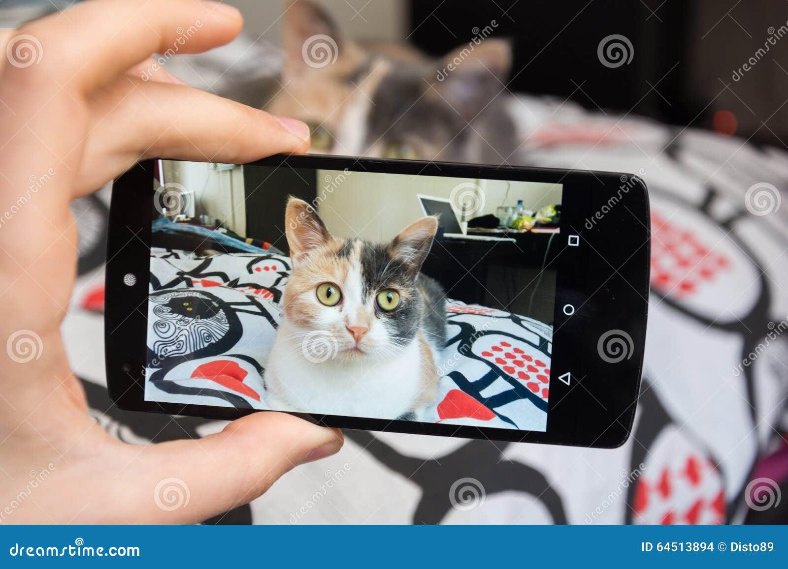 Bild av katten vid smartphonen