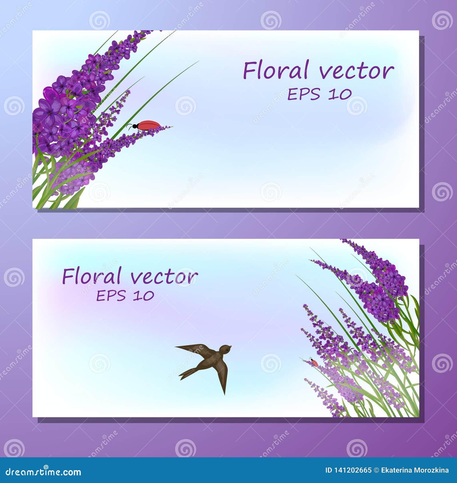 Bild des Lavendelfeldes