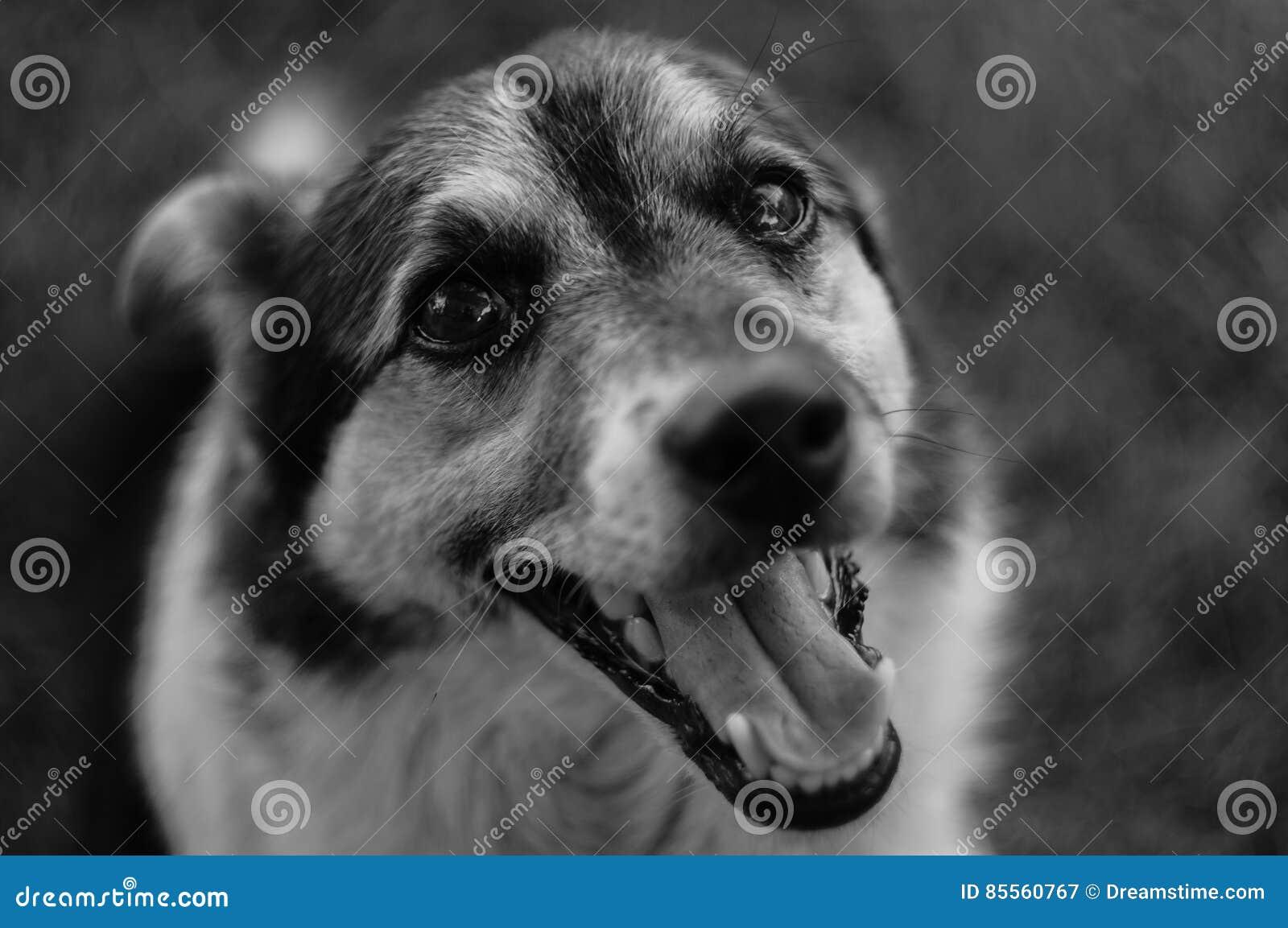 Bild eines Hundes in Schwarzweiss