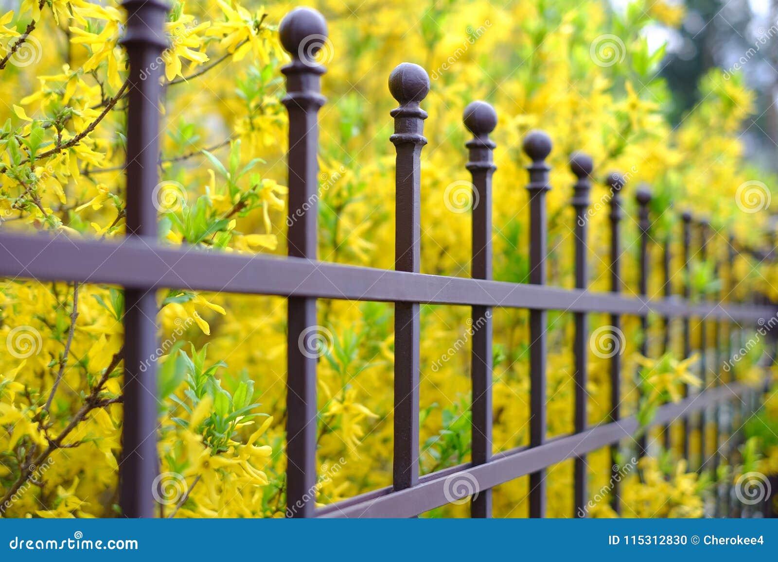 Bilden av ett härligt dekorativt metallstaket med det konstnärliga smidet på a mot våren blommar bakgrund Järnledstångslut upp