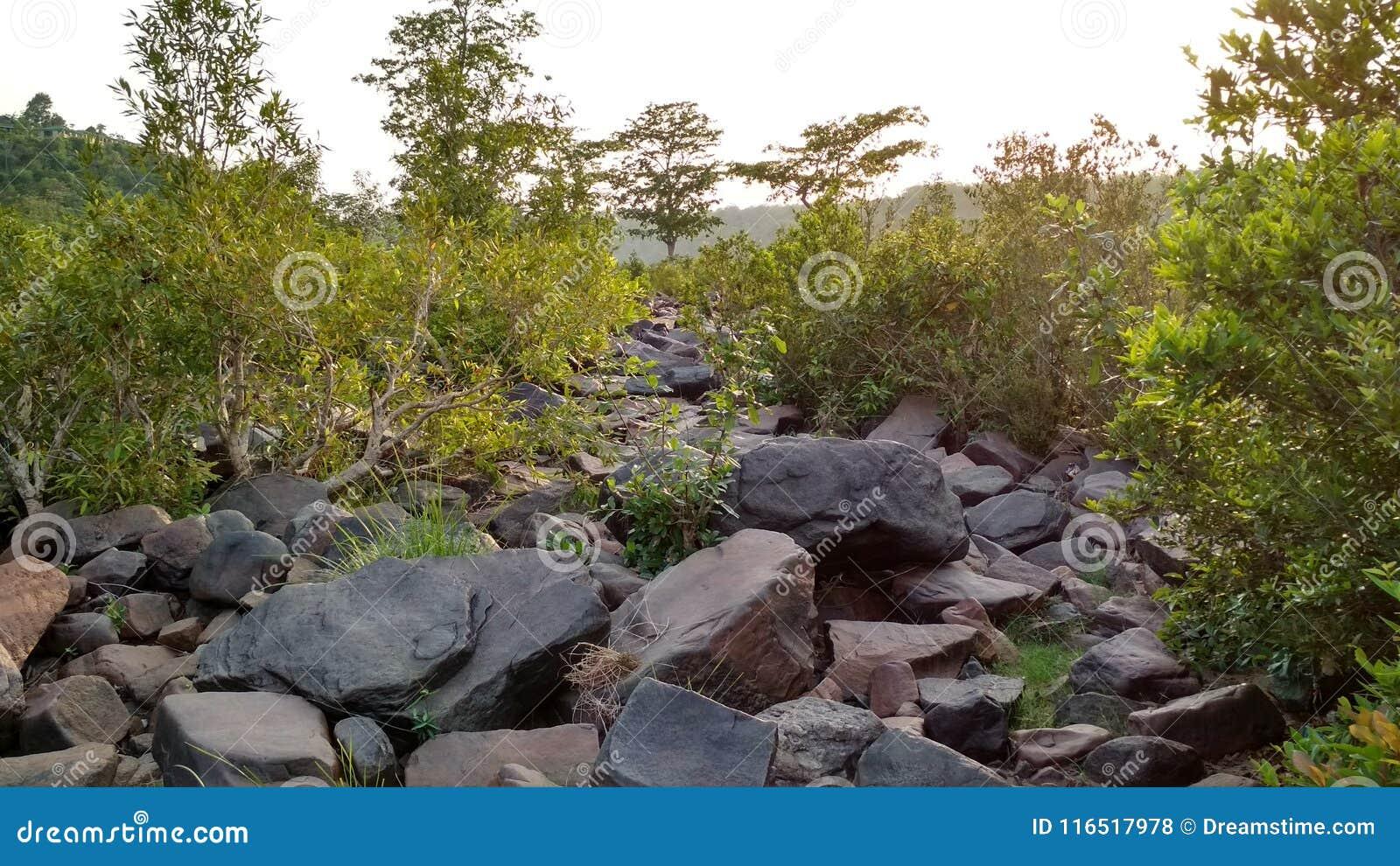 Bilden av härligt vaggar och planterar naturen, dess härliga blickar