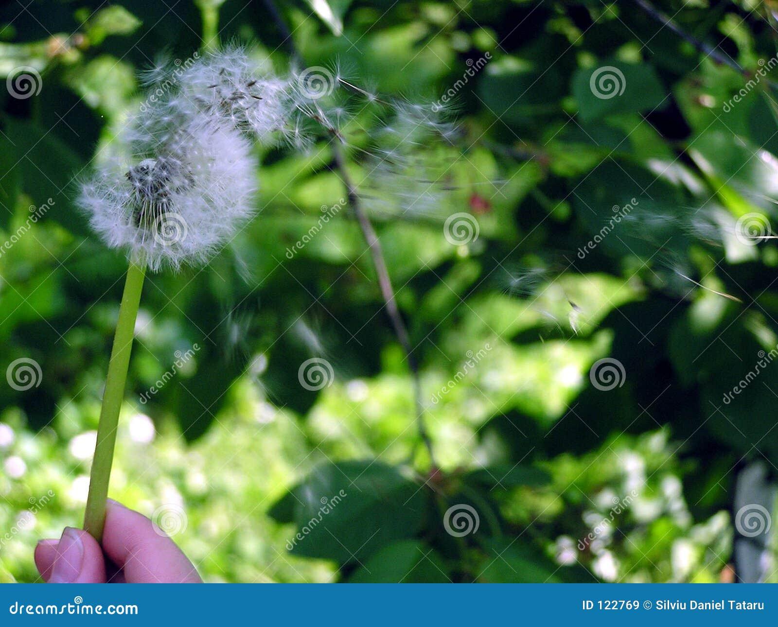 Bilden Sie einen Wunsch