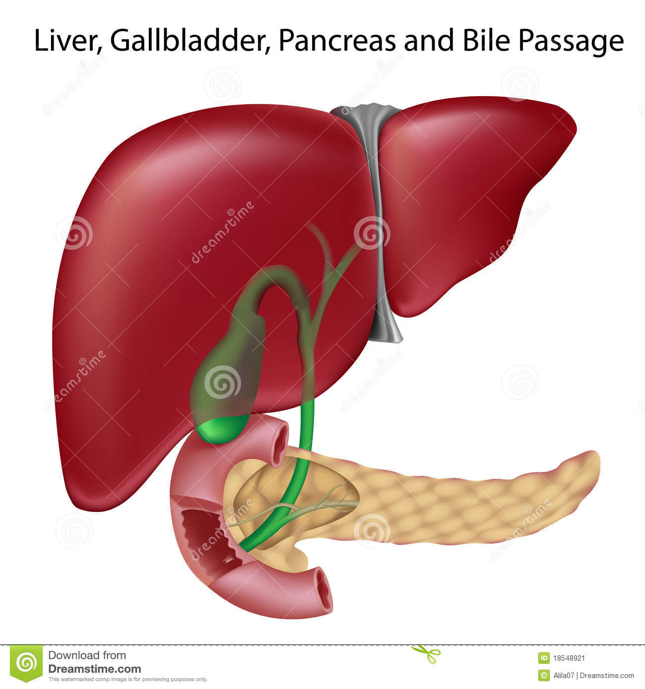 Bile passges, textbook accuracy, non-labeled v.