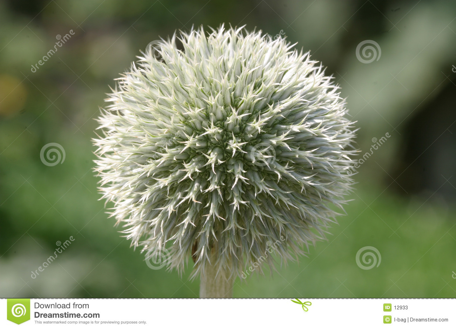 Bille de fleur