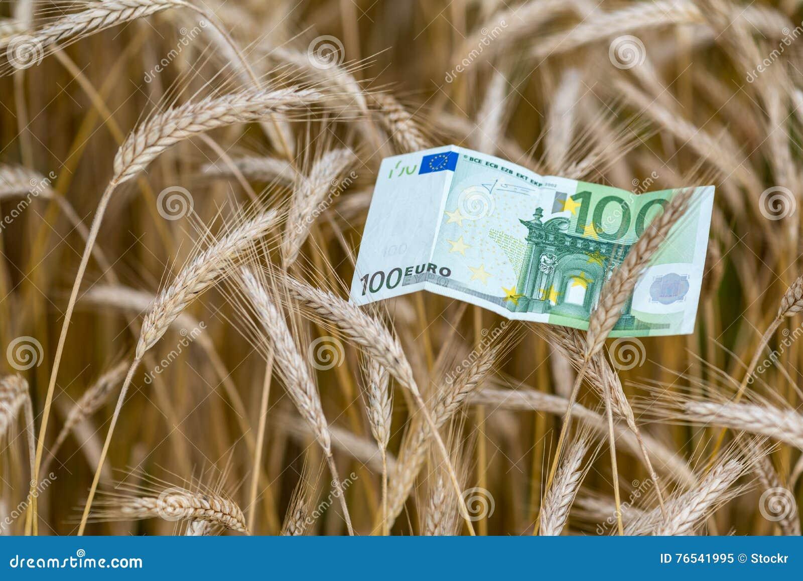 Billete de banco y trigo euro