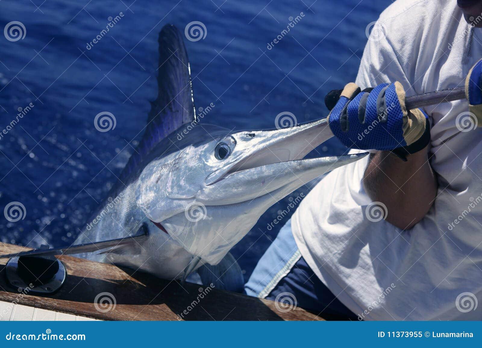 Billfish de de witte vangst en versie van de Marlijn op boot