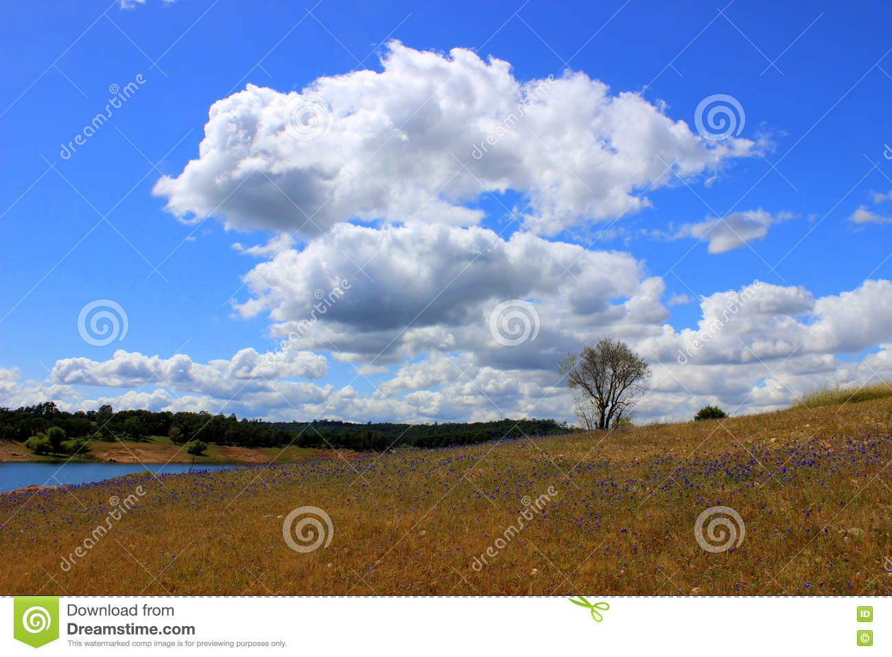 billowy  Billowy Clouds stock image. Image of water, billow, clouds - 74006429