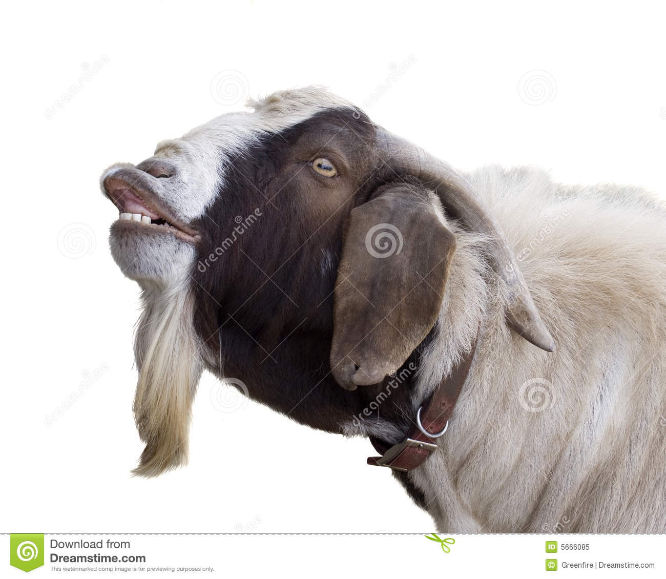 billy goat royalty free stock photo image 5666085 clip art goat free clip art goats climbing