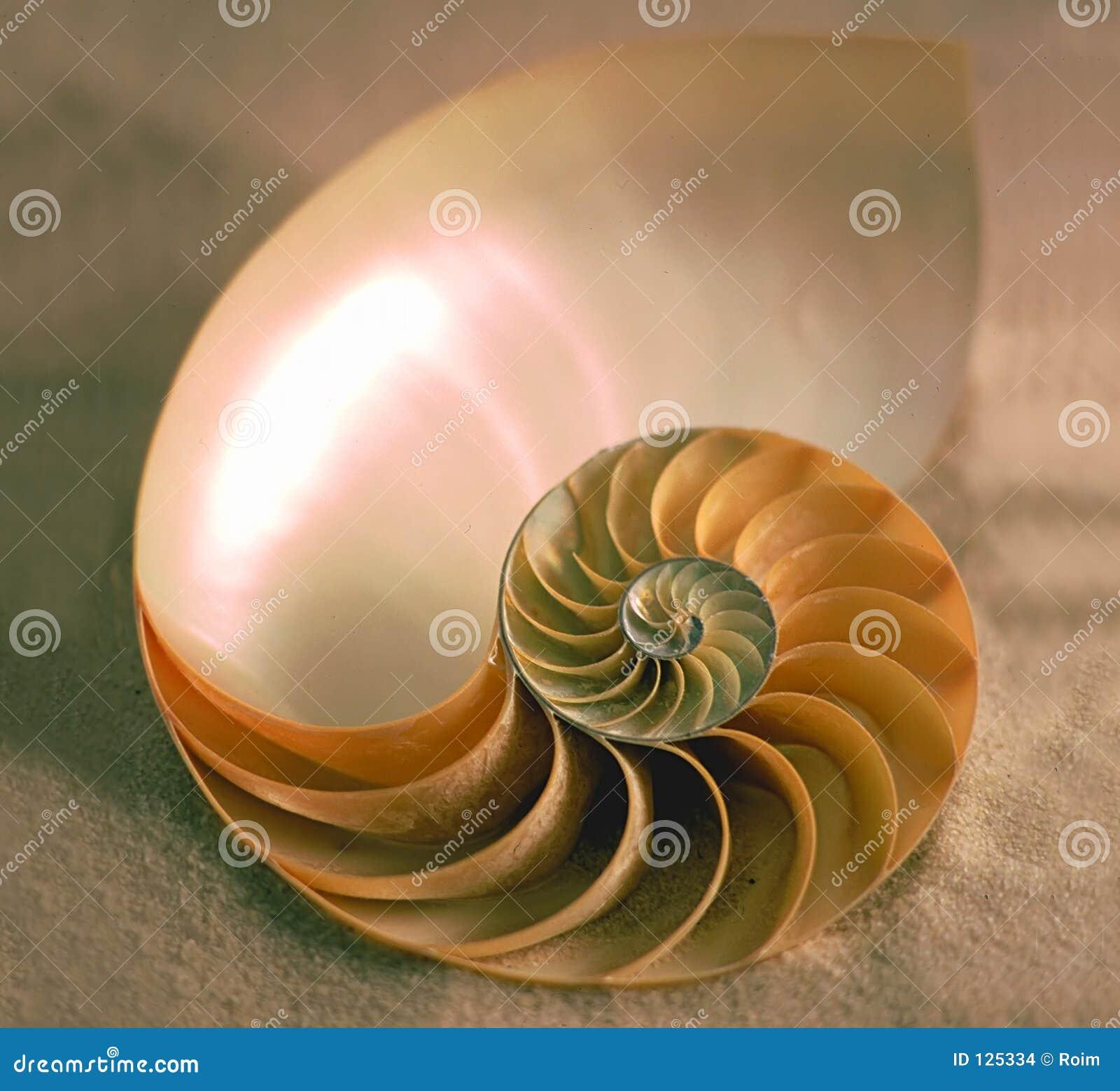 Binnen van Nautilus