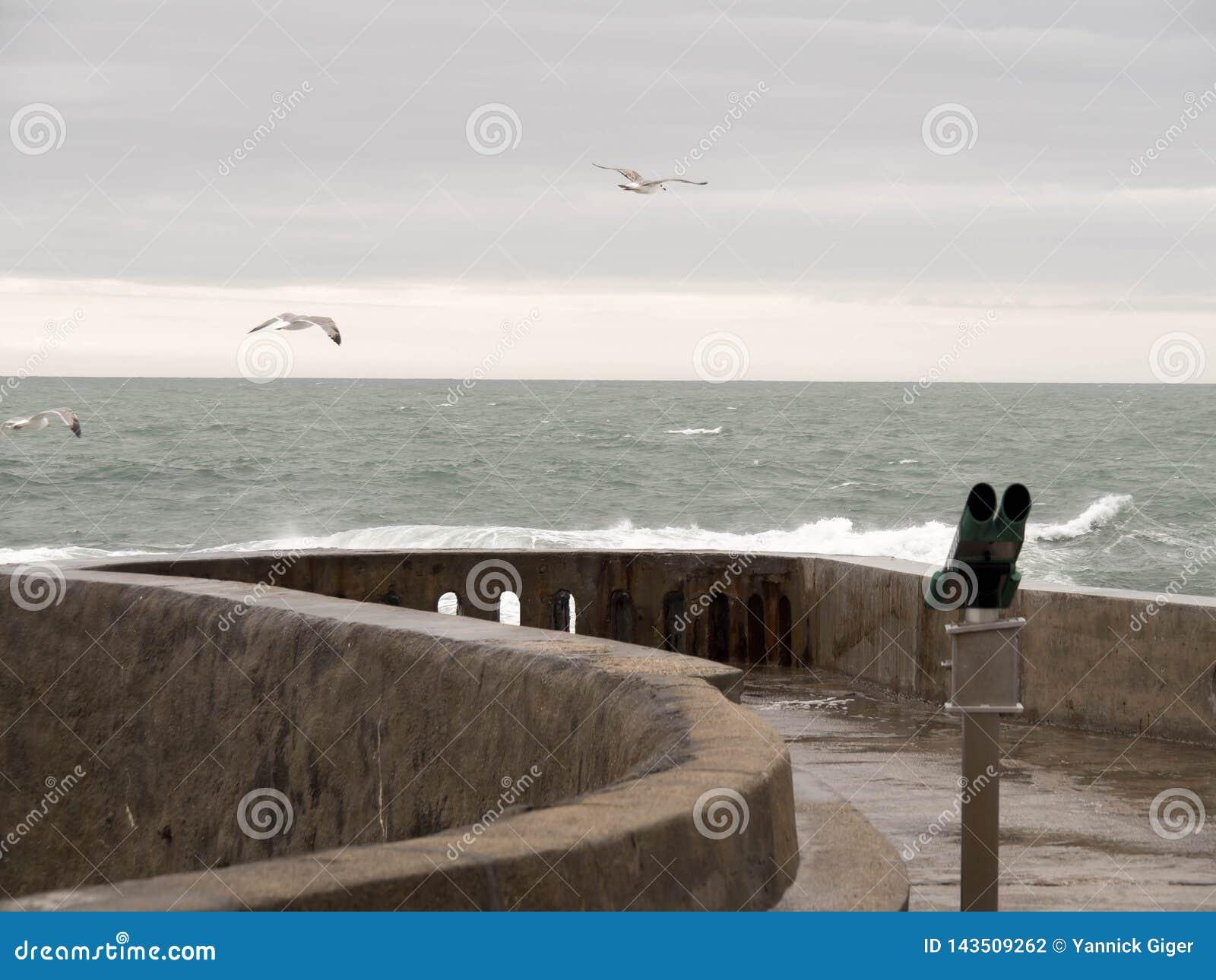 Binocular y tres gaviotas que vuelan lejos de la costa