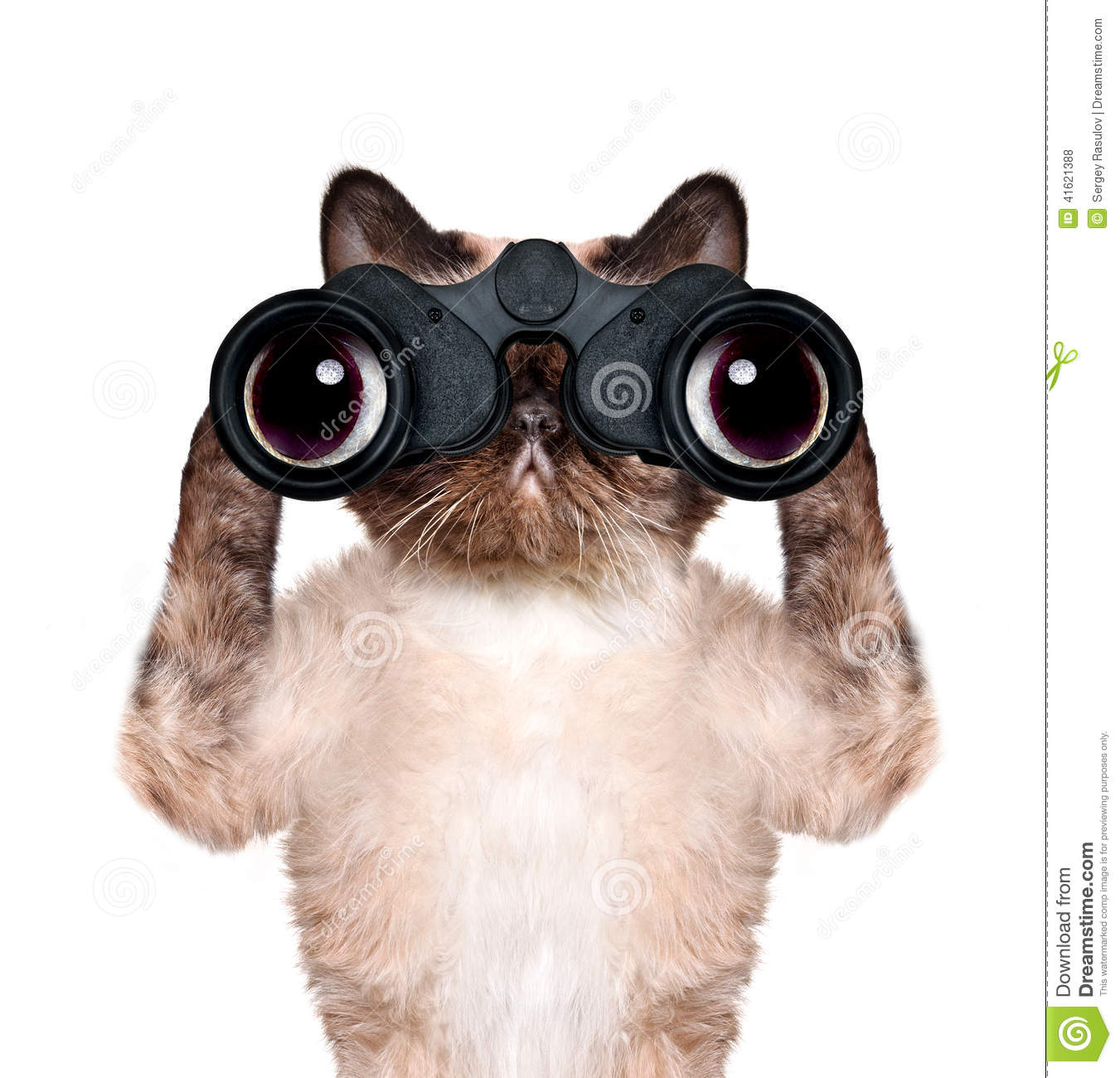 Binoculars cat searching, looking and observing with care. Isolated on ...