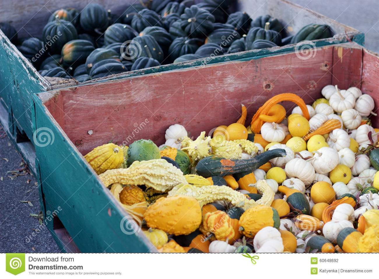 Bins Of Acorn Squash White Pumpkins Decorative Gourds For Sale