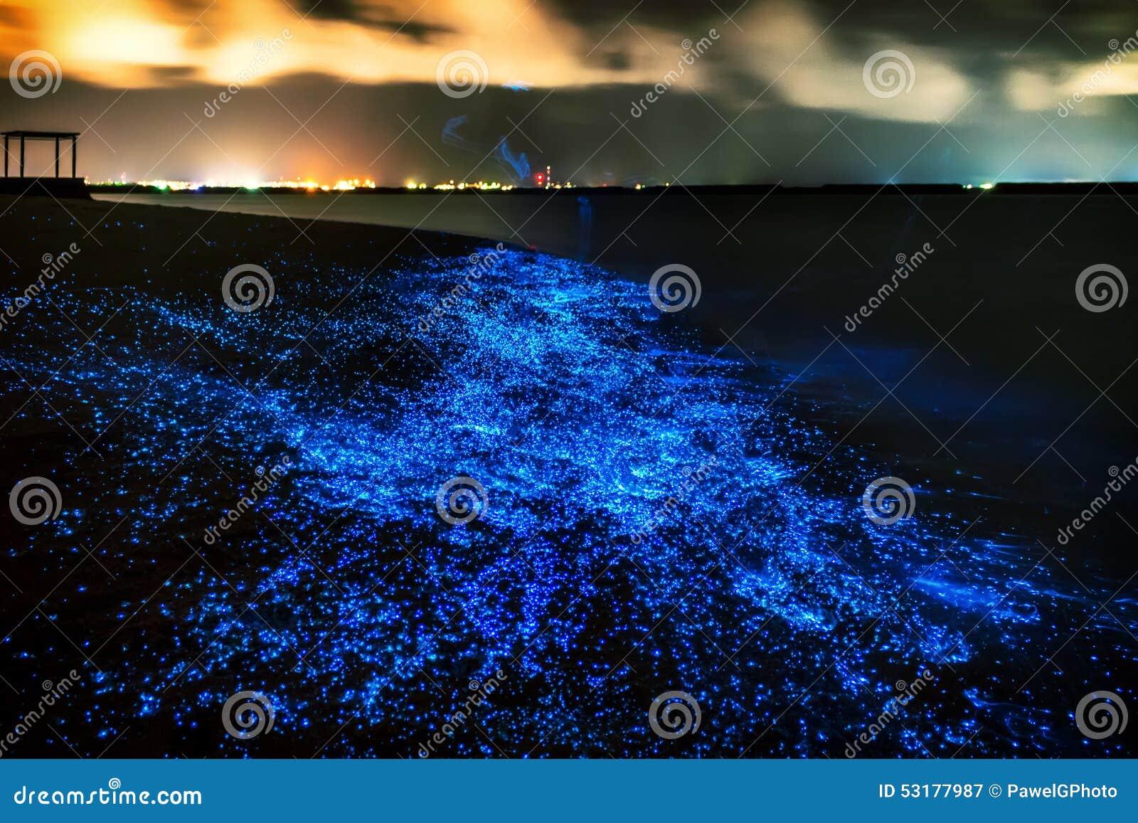 Bio luminiscencia Iluminación del plancton en Maldivas Mucho bri
