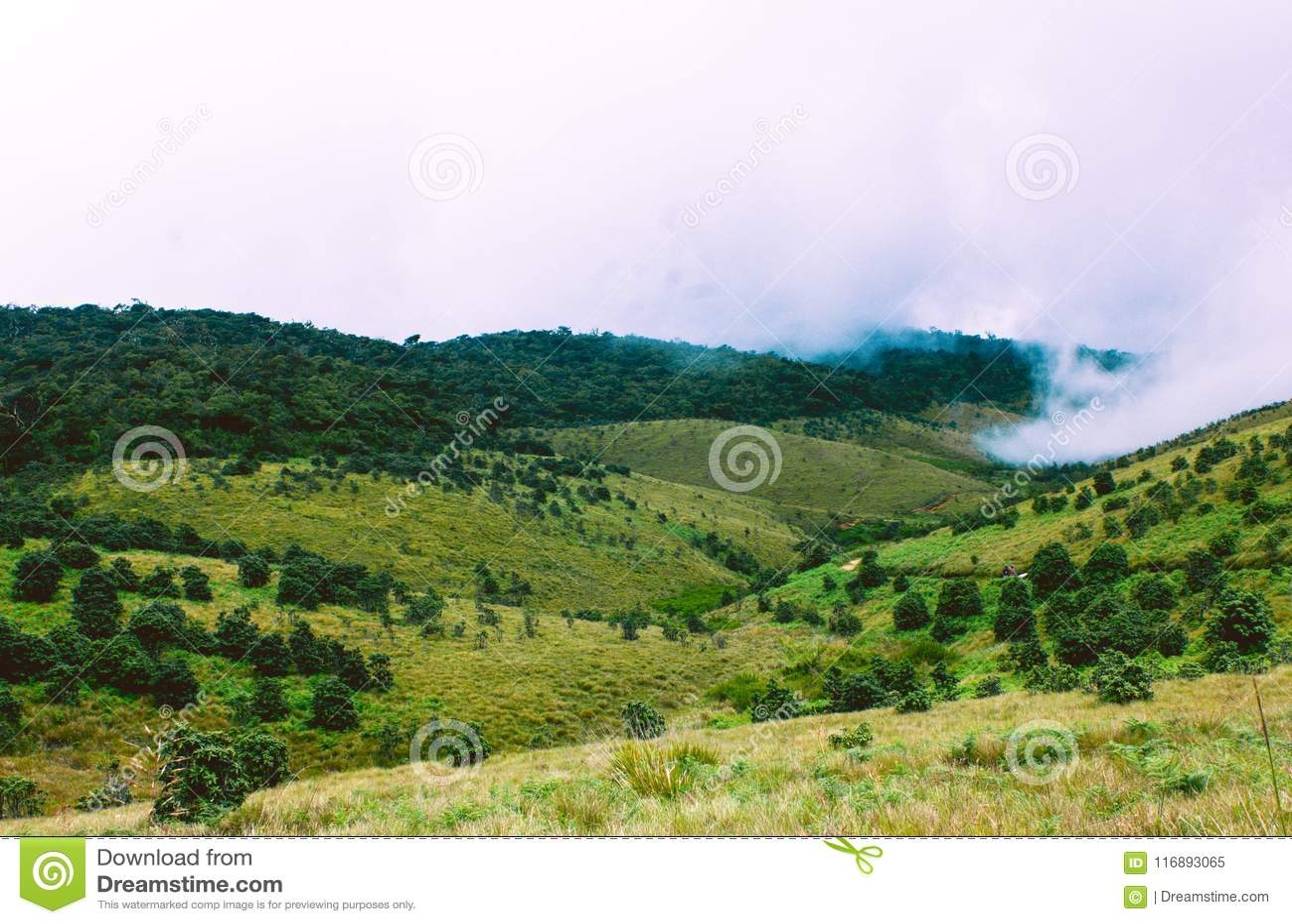 Biodiversidad de Horton Plains National Park, Sri Lanka