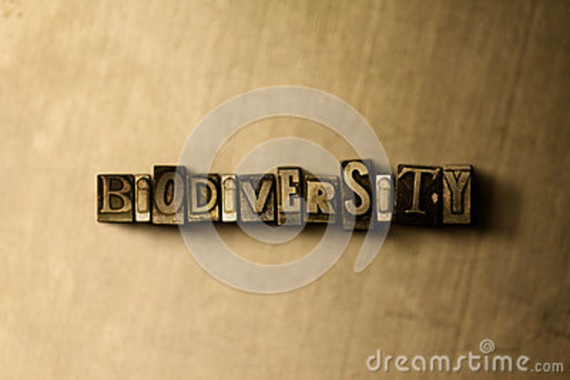 BIODIVERSITY - close-up of grungy vintage typeset word on metal backdrop
