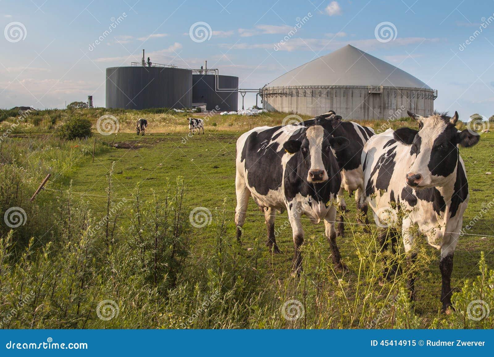 biogas cow - photo #1