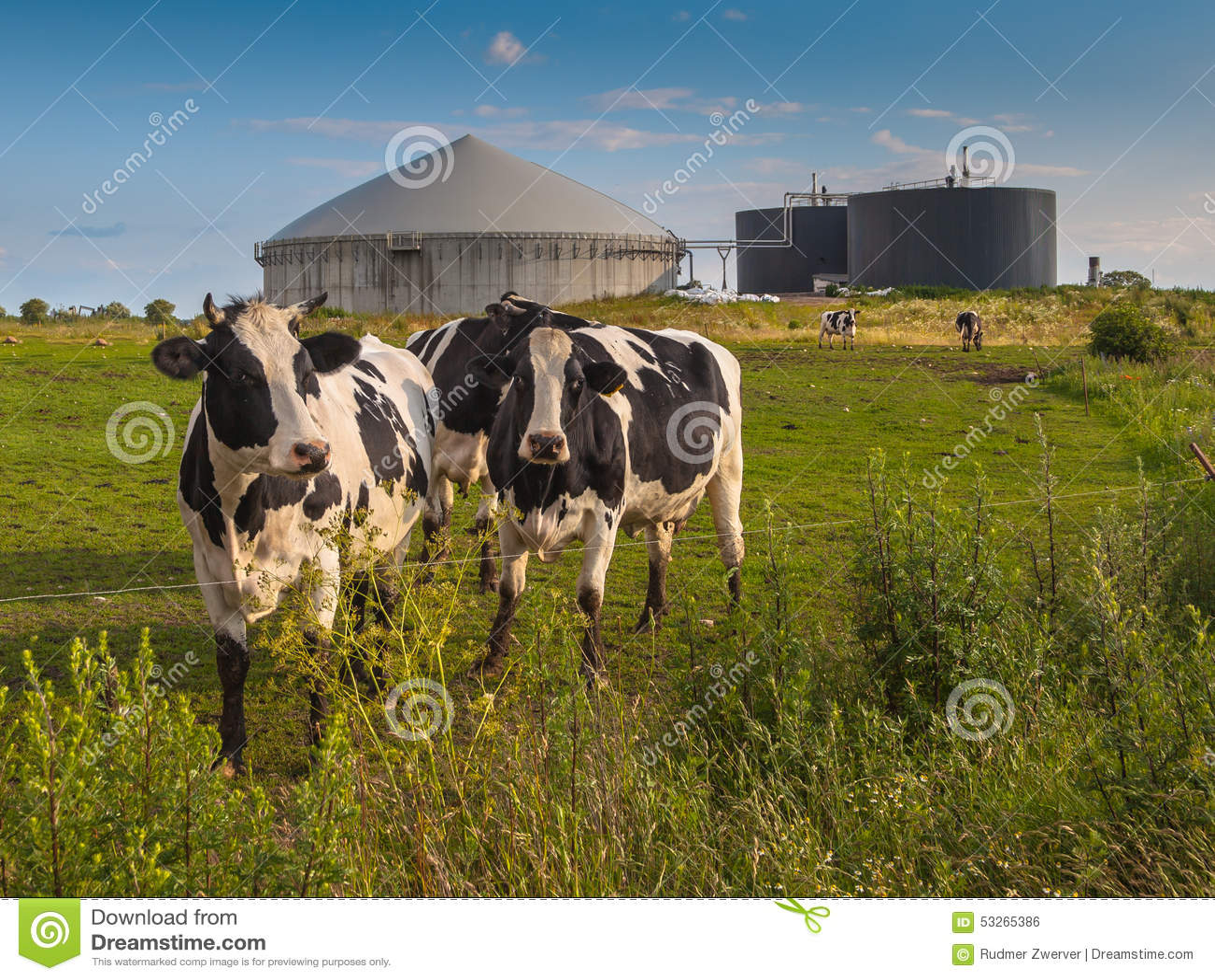 biogas cow - photo #4