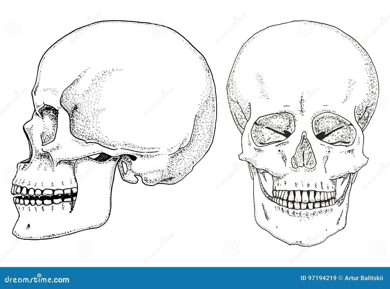 Contemporáneo Anatomía De La Hoja De Trabajo Del Cráneo Ideas ...