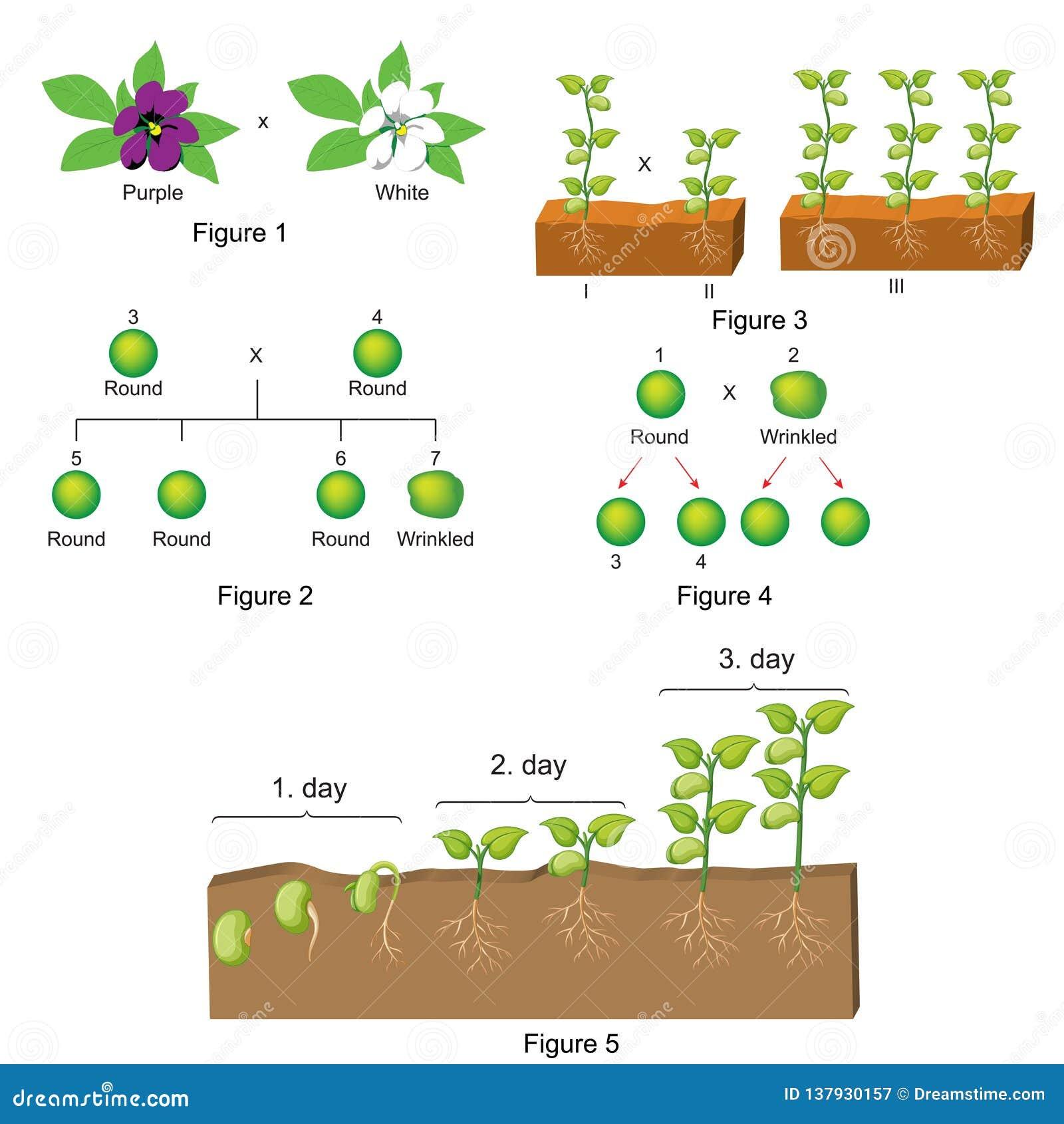 Biologia - molde da pergunta e resposta