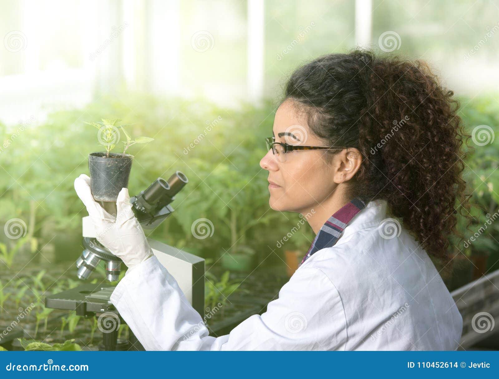 Biologinnehavkruka med grodden