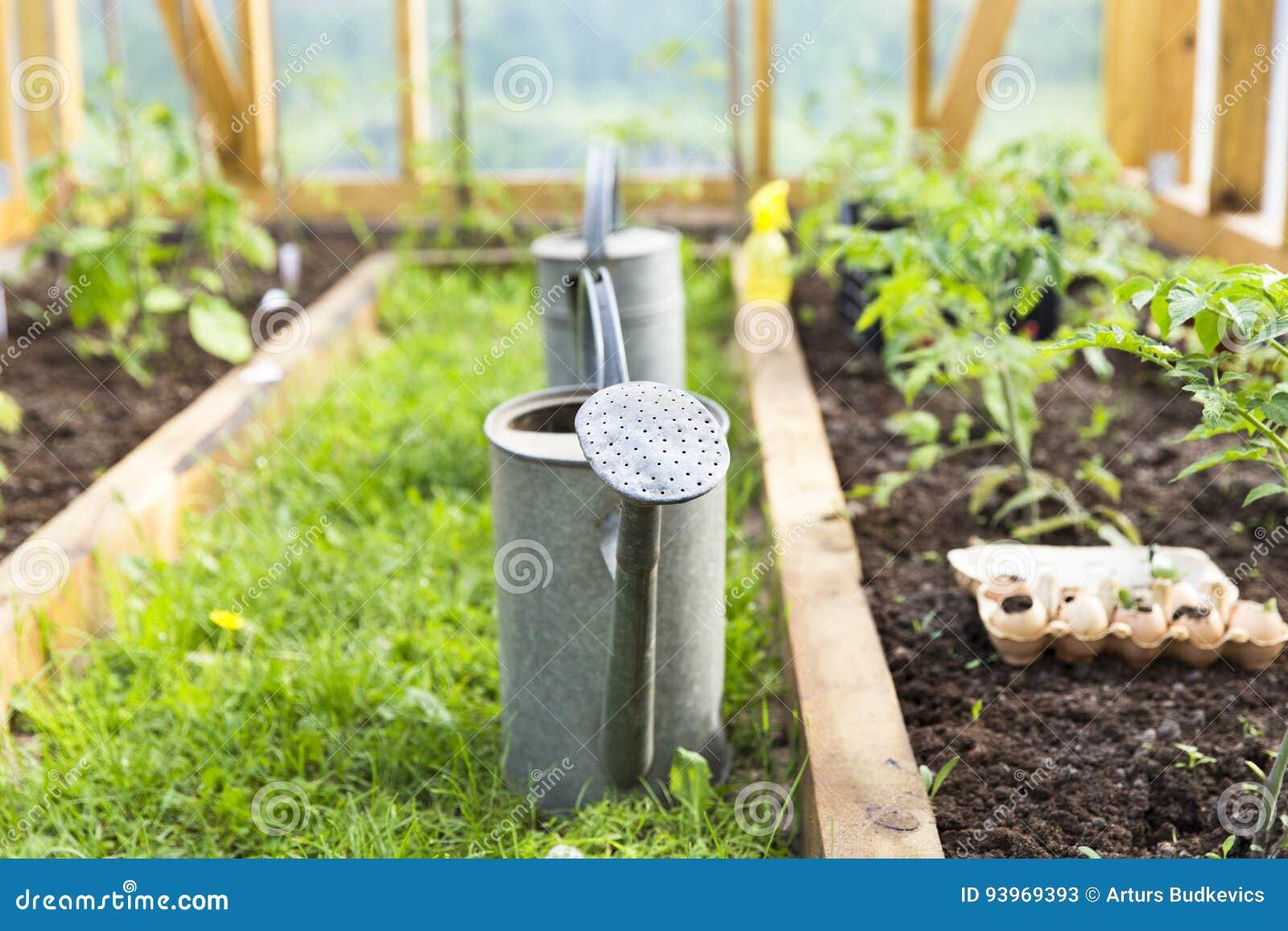 Biologische Landwirtschaft, arbeitend, Landwirtschaftskonzept im Garten Gießkanne im Gewächshaus nave