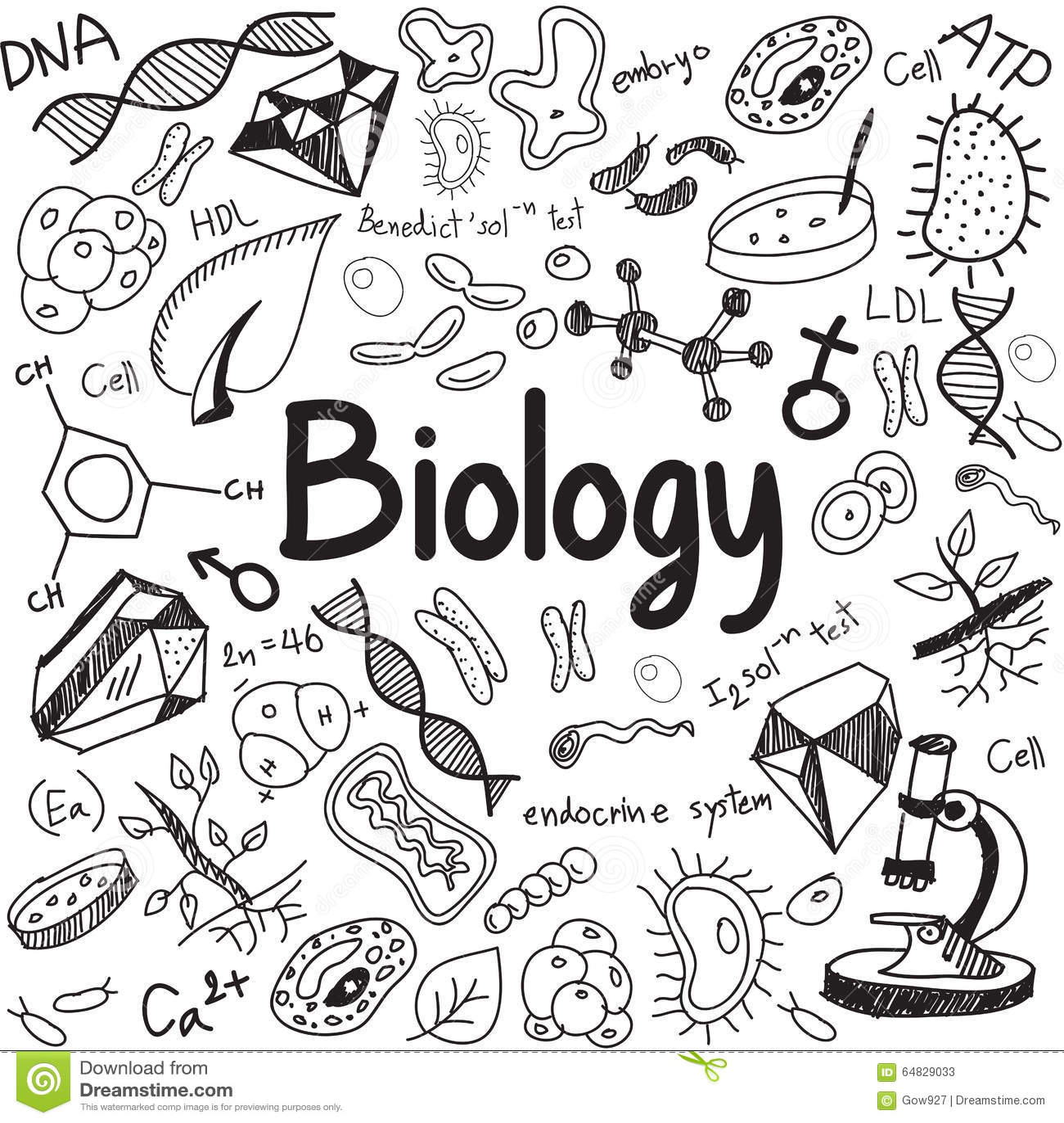 Biology paper