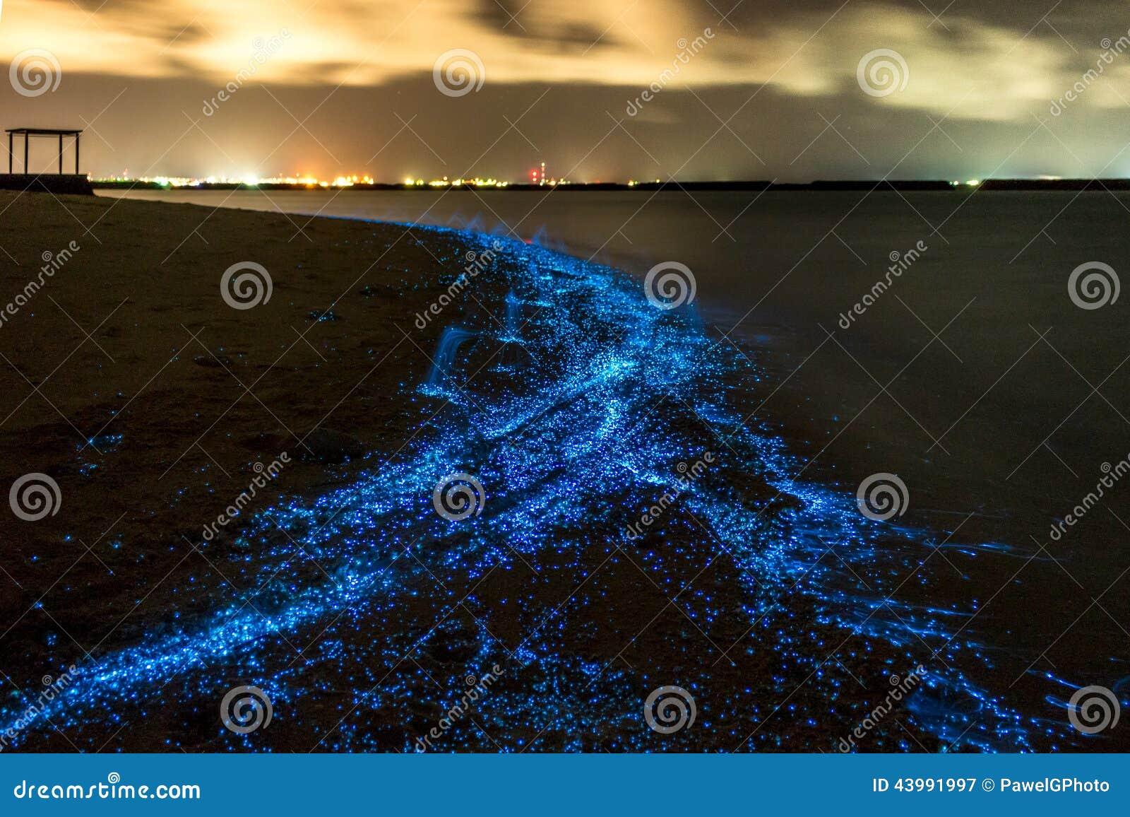Bioluminescência Iluminação do plâncton em Maldivas
