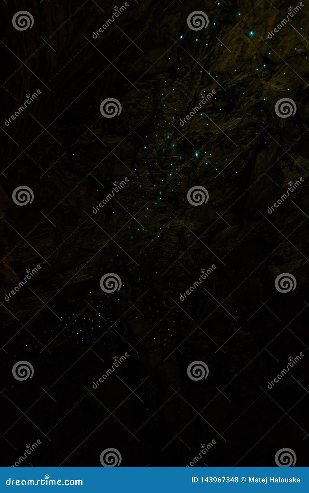 Bioluminiscent-Glühwürmchen, die in Waipu-Höhlen, Northland, Nordinsel, Neuseeland glänzen