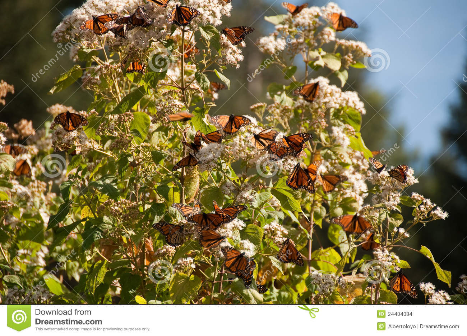 Biosfery motylia Mexico monarcha rezerwa