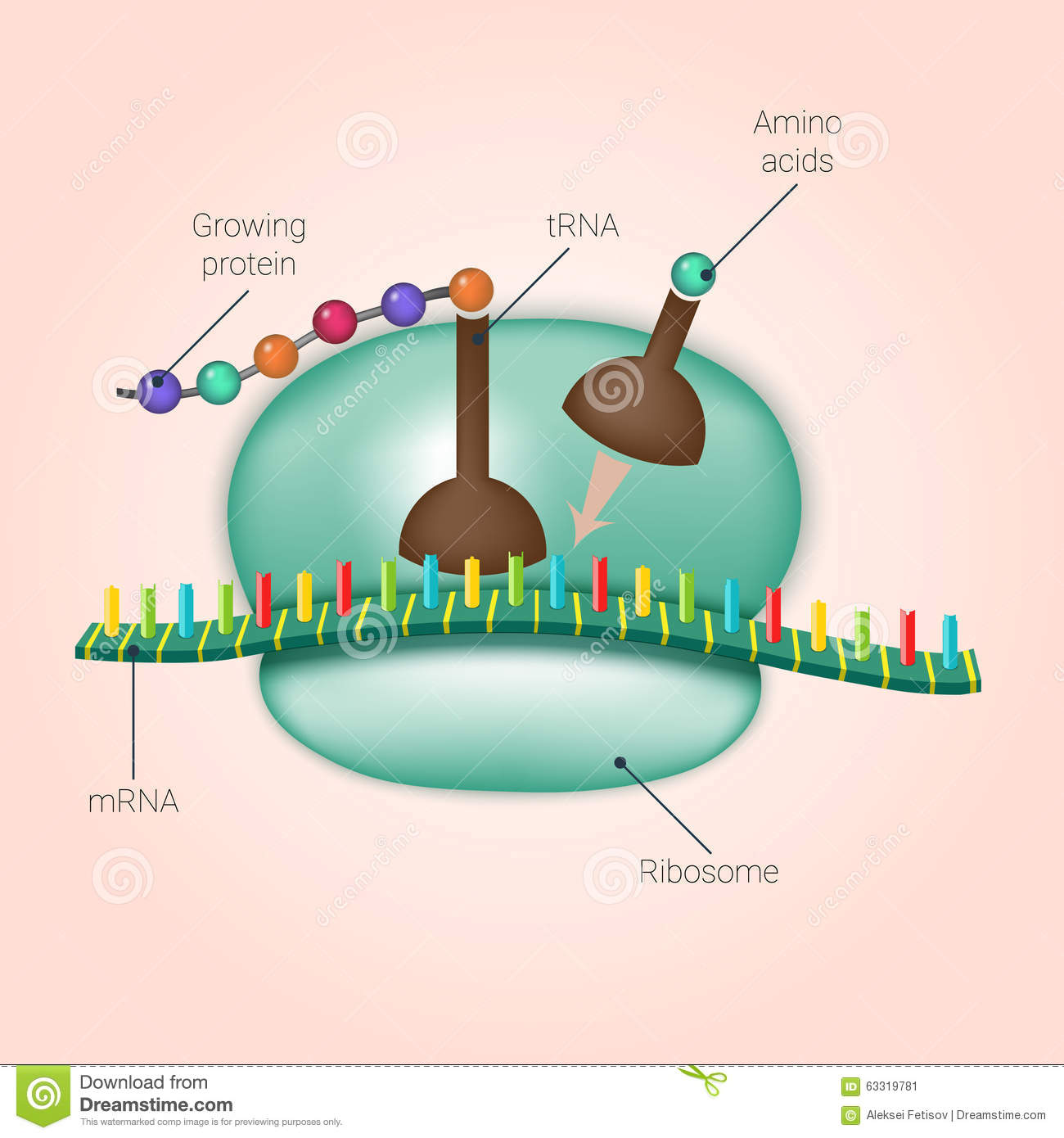 Ribosome stock photos royalty free images dreamstime pooptronica