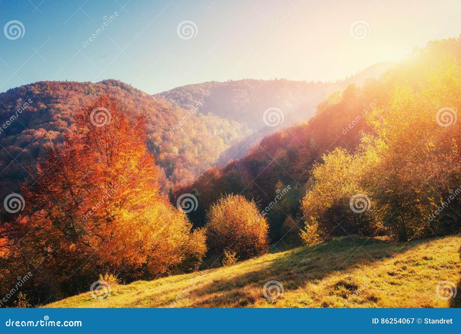 Birch forest in sunny afternoon while autumn season. Landscape. Ukraine