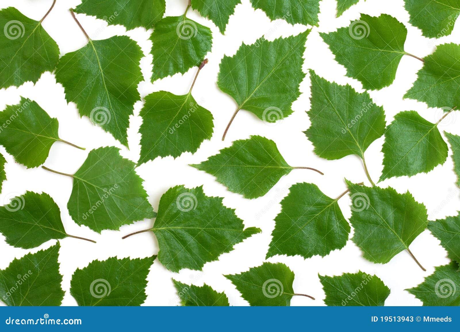 Березовые листья из бумаги