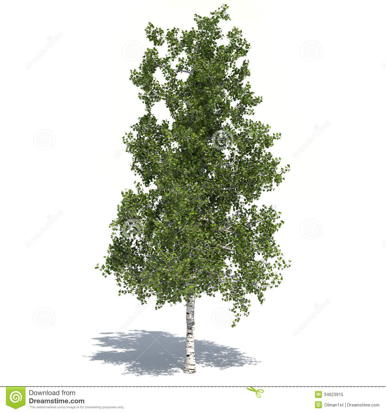 Birch Tree 3d Illustrated Royalty Free Stock Photo - Image: 34623915