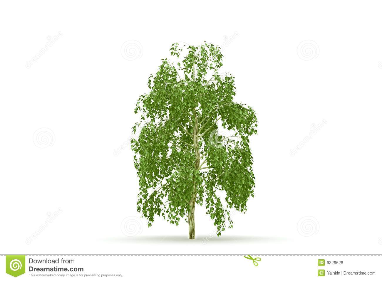 birch tree black singles 1 [corrosion of metals by wood/bm] corrosion of metals by wood 1 introduction wood is a corrosive substance by nature, and can be made more corrosive by treatment given to it.