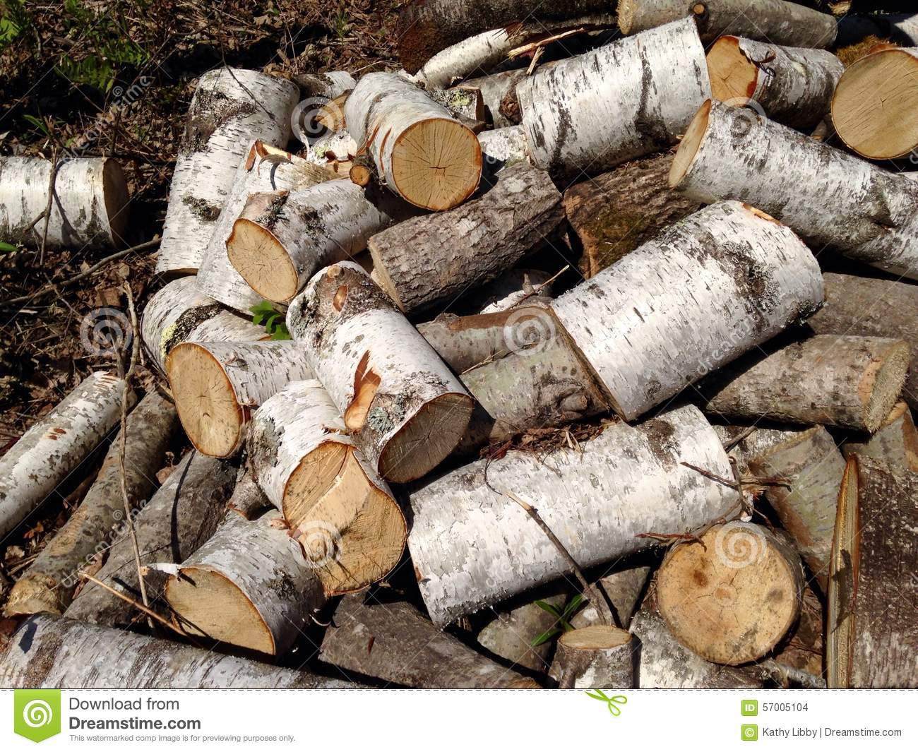 Birch tree logs stock photo image 57005104 for Tree log