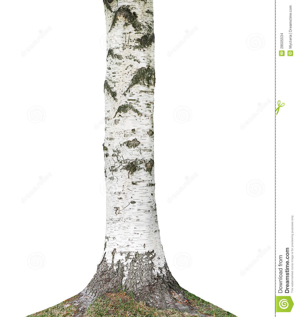 birch tree trunk stock photo image of object tree trunk 28505534