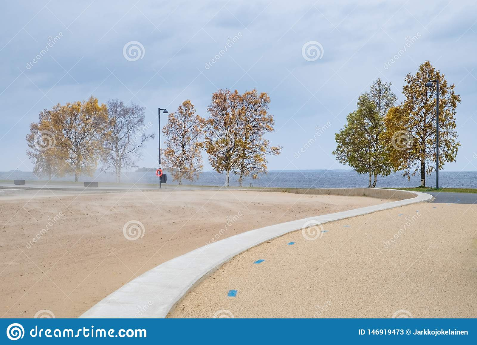 Birch trees and blowing sand on a windy autumn day